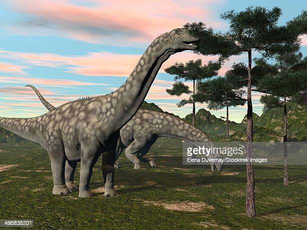 Argentinosaurus dinosaur grazing on treetops.