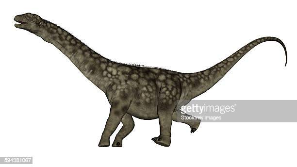 Argentinosaurus dinosaur isolated on white background.