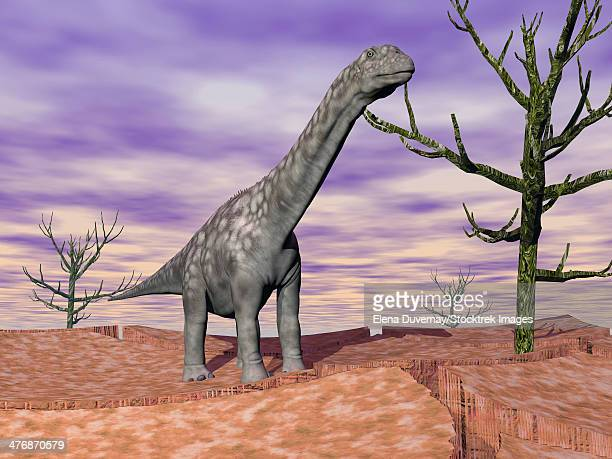 Argentinosaurus dinosaur standing on the cracked desert ground next to dead trees.