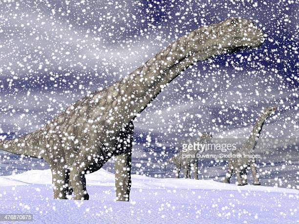 Argentinosaurus dinosaur walking in the snow on a winter day.