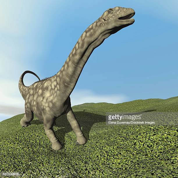 Argentinosaurus dinosaur walking on the grass.