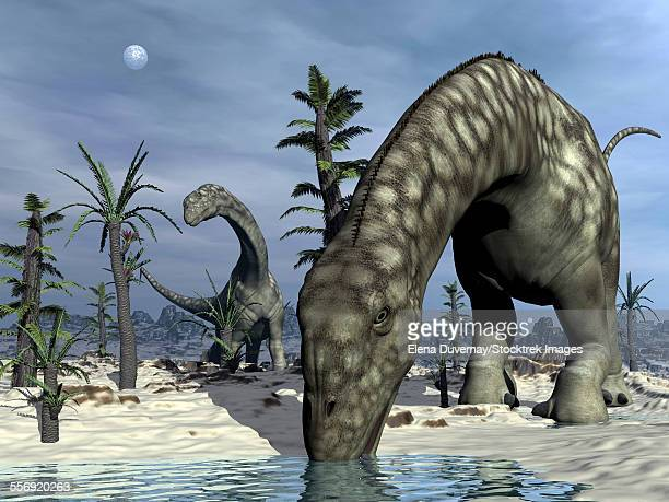 Argentinosaurus dinosaurs grazing in the desert with tempskya and williamsonia plants.
