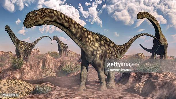 Argentinosaurus dinosaurs walking in the rocky desert.