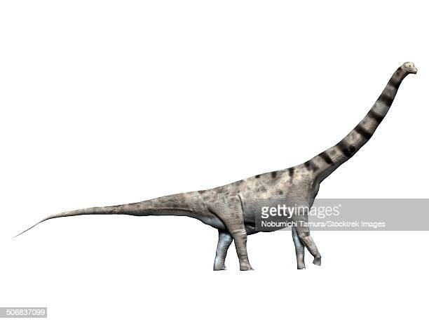 Argentinosaurus is a sauropod dinosaur from the Late Cretaceous Period.