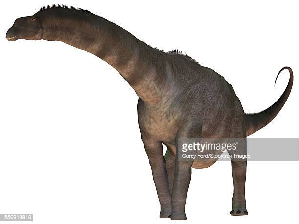 Argentinosaurus was a titanosaur sauropod dinosaur from the Cretaceous Period of Argentina.