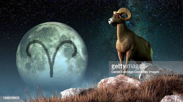 Aries is the first astrological sign of the Zodiac.  Its symbol is the ram.