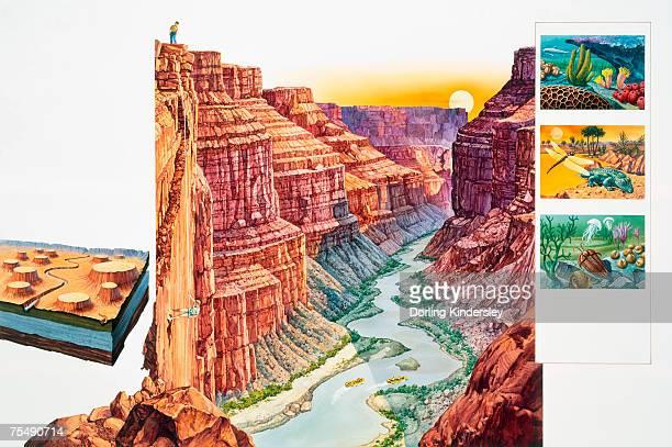 ilustrações de stock, clip art, desenhos animados e ícones de usa, arizona, grand canyon, steep-sided gorge, eroded by colorado river, cross-section and illustrative insets - formação rochosa