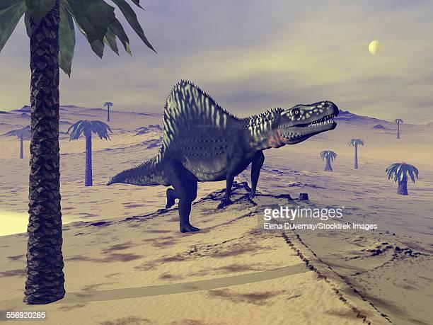 Arizonasaurus dinosaur walking in the desert amongst bjuvia trees.