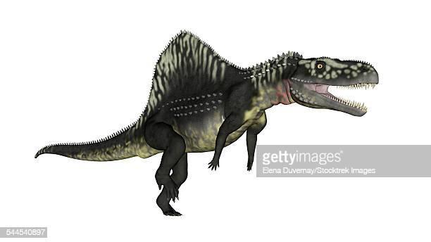 arizonasaurus dinosaur, white background. - animal spine stock illustrations, clip art, cartoons, & icons