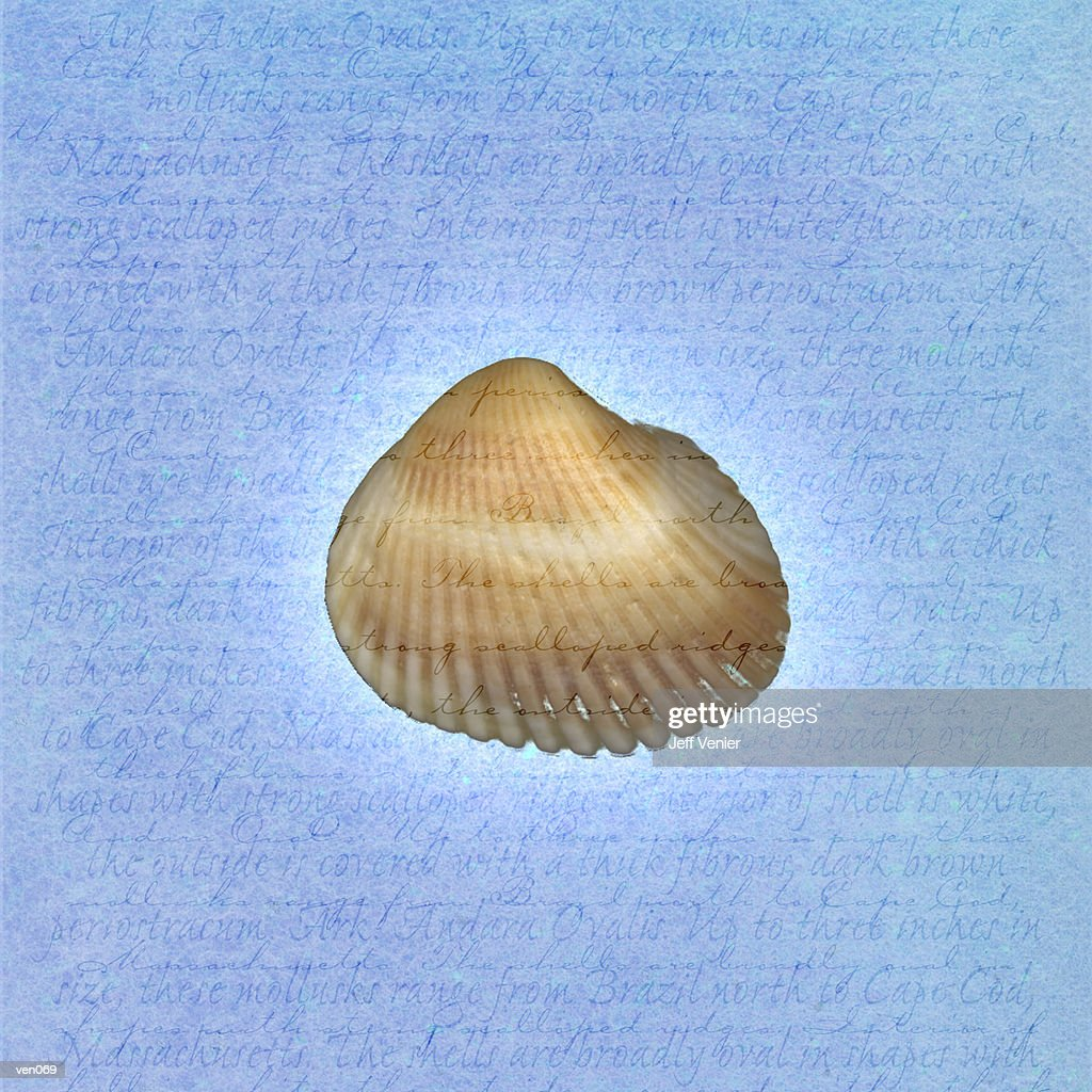 Ark Shell on Descriptive Background : Stock Illustration