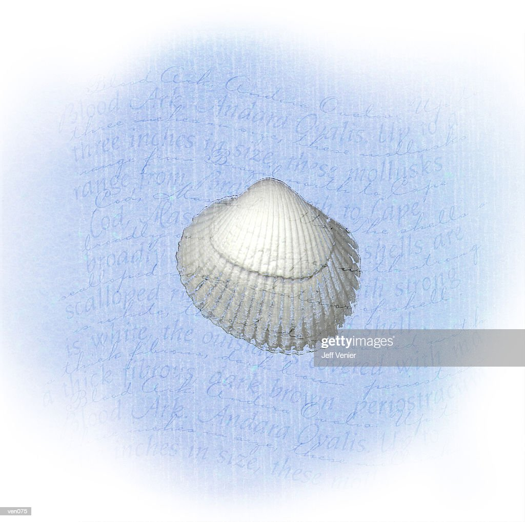 Ark Shell on Wavy Descriptive Background : Stock Illustration