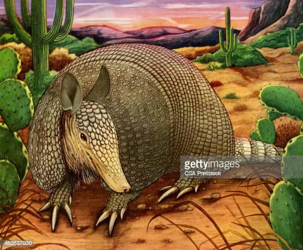 armadillo in the desert - armadillo stock illustrations