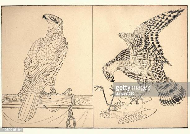 art of japan, two birds of prey by tiso kwan - falconry stock illustrations