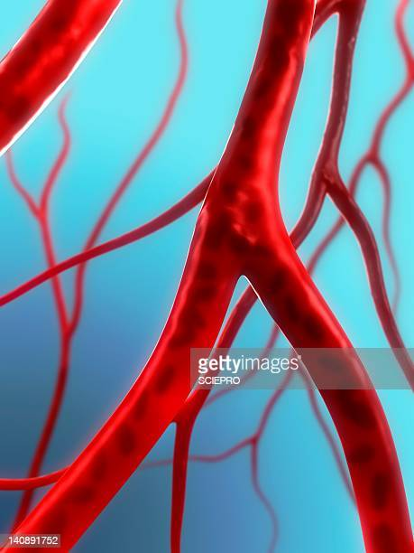 arteries, artwork - blood vessel stock illustrations, clip art, cartoons, & icons