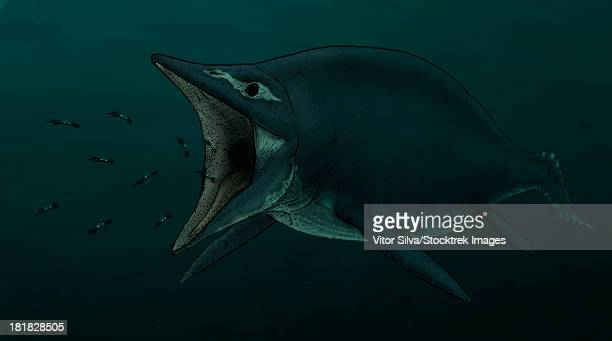 Artist's concept of the suction feeding in Shastasaurus, where the ichthyosaur hunts bioluminescent cephalopods in deep waters.