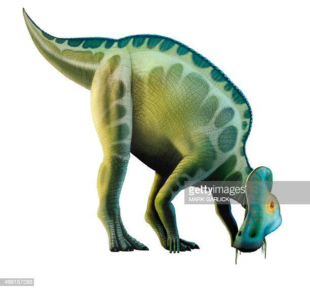 artwork of a corythosaurus dinosaur - corythosaurus casuarius stock illustrations, clip art, cartoons, & icons