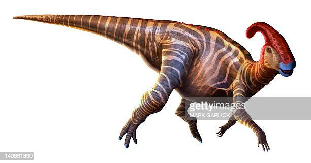 artwork of a parasaurolophus dinosaur - hadrosaurid stock illustrations, clip art, cartoons, & icons