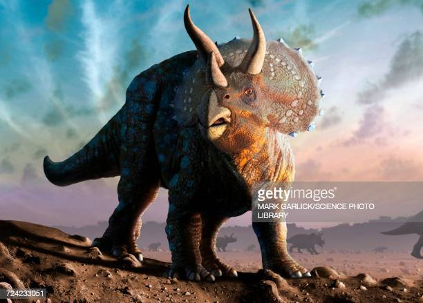 artwork of a triceratops - paleontology stock illustrations