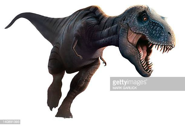 artwork of a tyrannosaurus rex running - paleontology stock illustrations