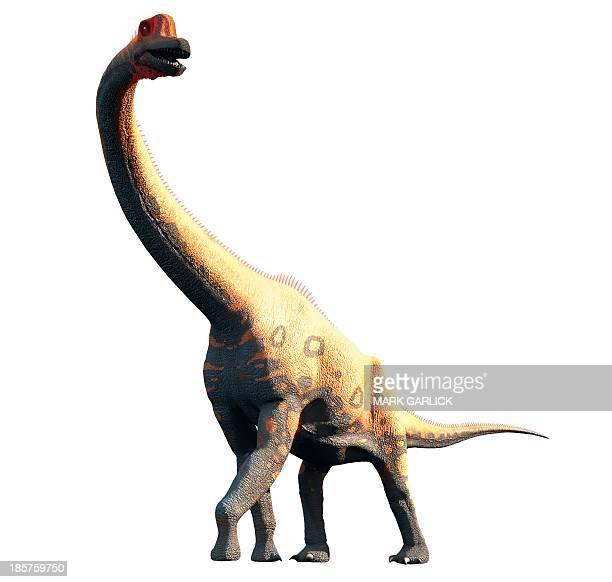 artwork of brachiosaurus - paleontology stock illustrations