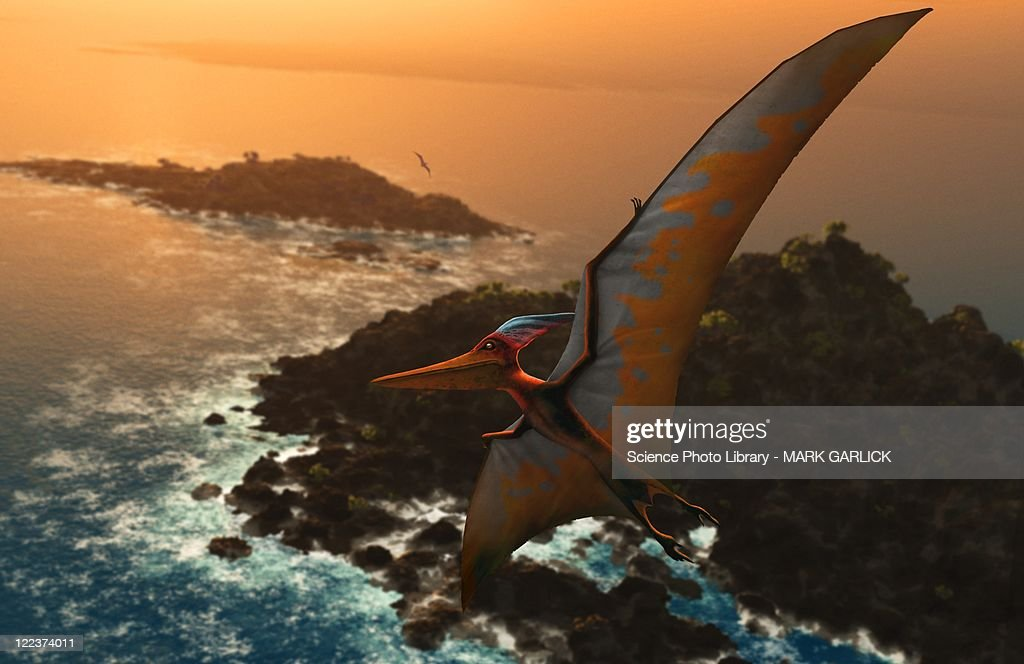 Artwork of pteranodon sternbergi : stock illustration