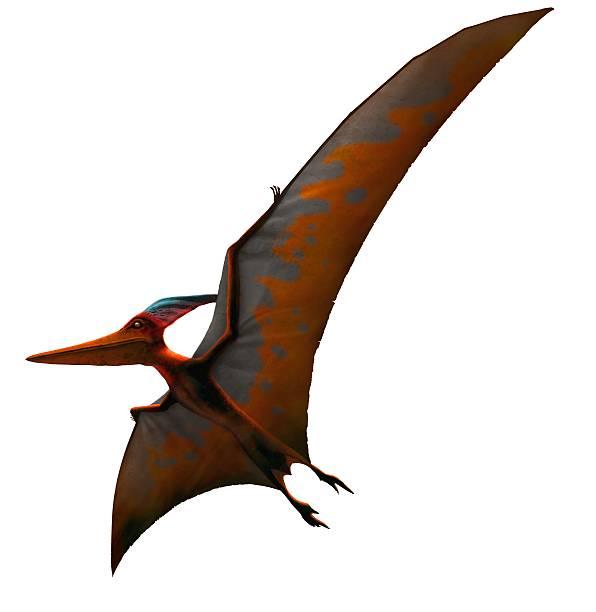 Artwork Of Pteranodon Sternbergi Wall Art