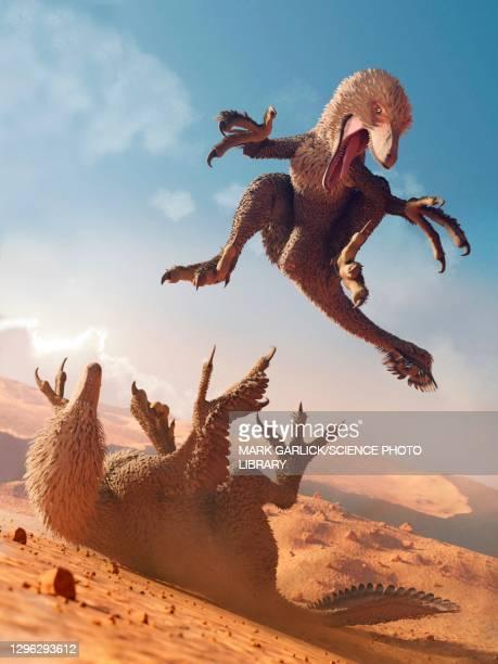 artwork of raptor dinosaurs fighting - dromaeosauridae stock illustrations