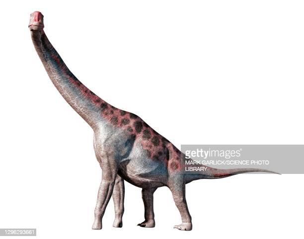 illustrazioni stock, clip art, cartoni animati e icone di tendenza di artwork of the dinosaur brachiosaurus - erbivoro