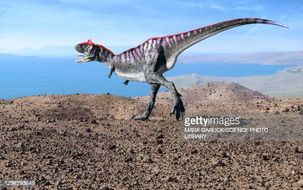 artwork of the dinosaur carnotaurus - theropod stock illustrations