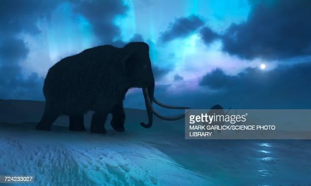 ilustraciones, imágenes clip art, dibujos animados e iconos de stock de artwork of the mammoths and aurora - animal extinto