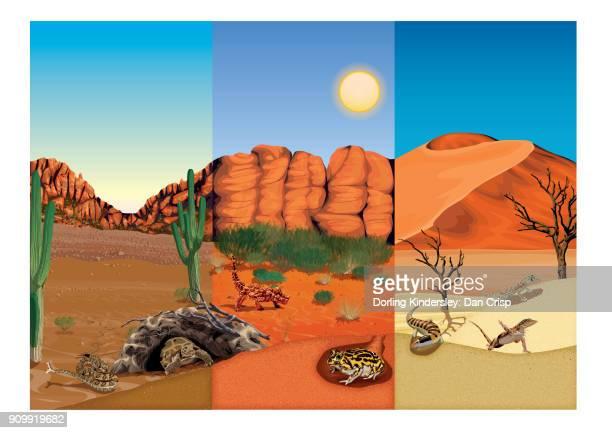 ilustraciones, imágenes clip art, dibujos animados e iconos de stock de artwork of three types of desert landscape with reptiles and amphibians that live there - reptil