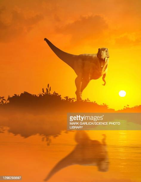 artwork of tyrannosaurus at sunset - scavenging stock illustrations