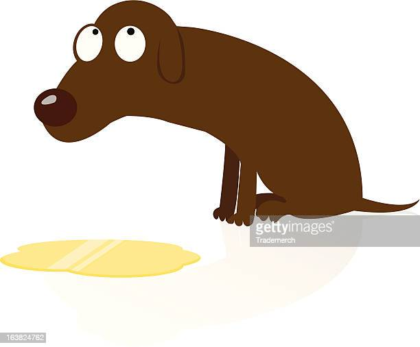 ashamed dog peed - urine stock illustrations