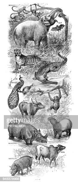 Asian animals engraving 1892