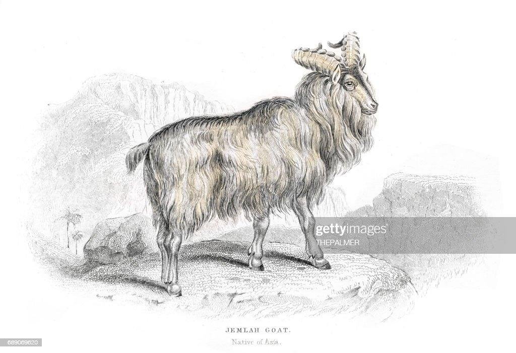 Asian mountain goat lithograph 1884 : Stock Illustration