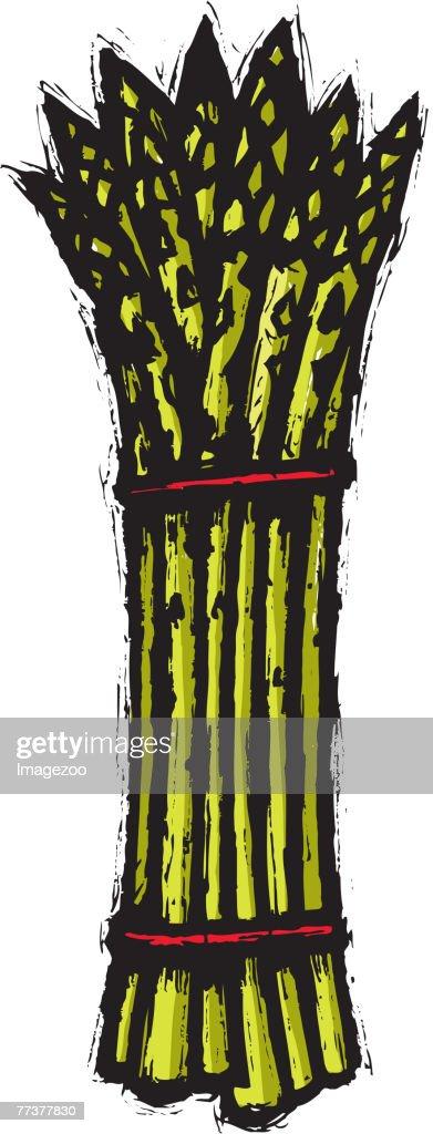 asparagus bunch : ストックイラストレーション