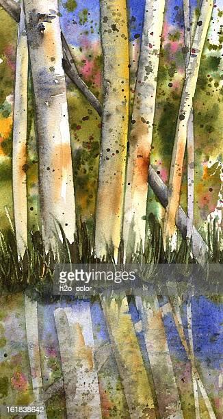 aspen trees - aspen tree stock illustrations, clip art, cartoons, & icons