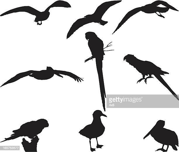 Collection de silhouettes d'oiseaux
