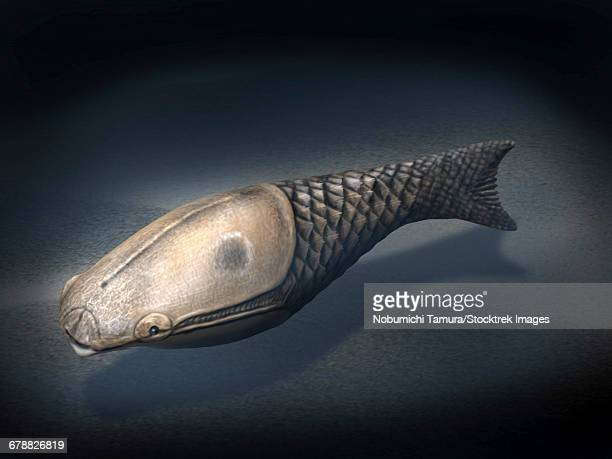 Athenaegis is an armored fish from the Paleozoic Era.