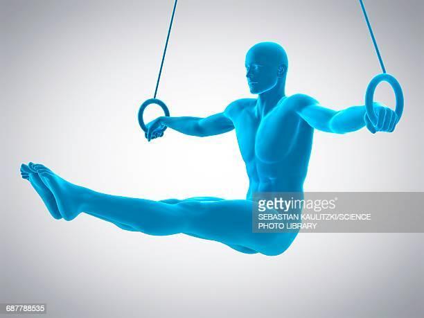 athlete using gymnastic rings, illustration - gymnastics stock illustrations