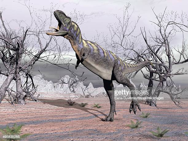 Aucasaurus dinosaur roaring in the desert.