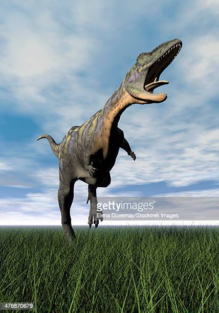 Aucasaurus dinosaur running on the green grass with mouth open.
