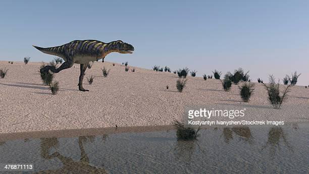 ilustraciones, imágenes clip art, dibujos animados e iconos de stock de aucasaurus running along the shore. - paleozoología