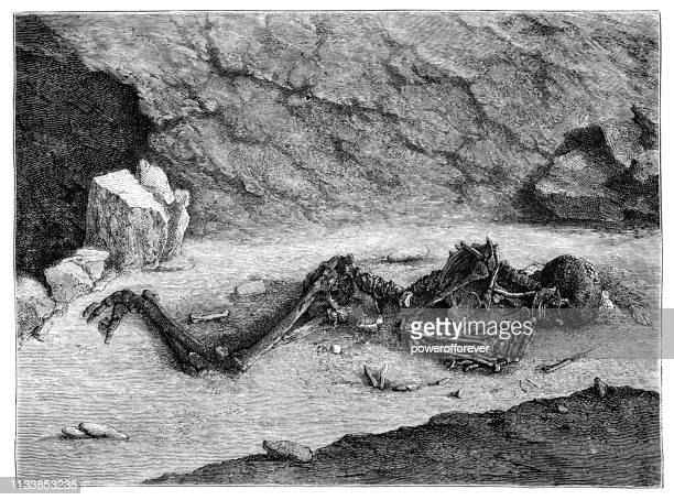 "aurignacian skeleton ""the fossil man of menton"" at balzi rossi caves, liguria, italy - 43,000 to 37,000 years ago - paleolitico stock illustrations"