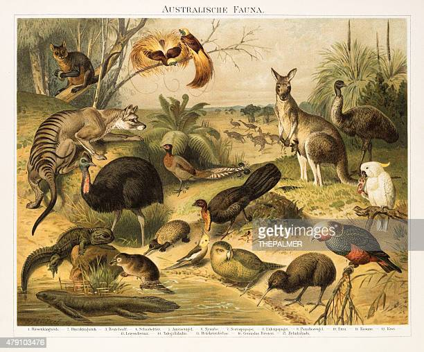 Australian fauna Chromolithograph 1896