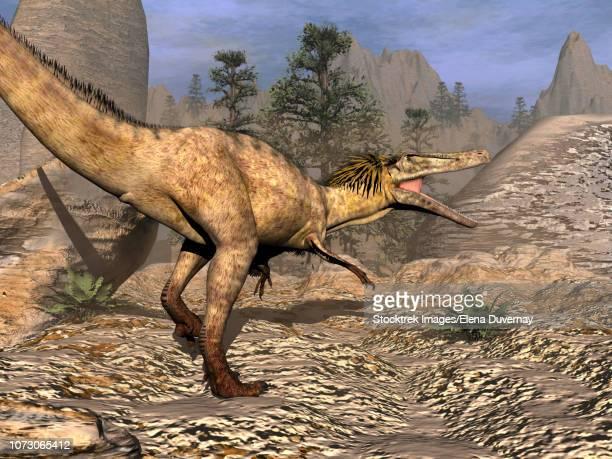 austroraptor dinosaur walking in the desert. - dromaeosauridae stock illustrations