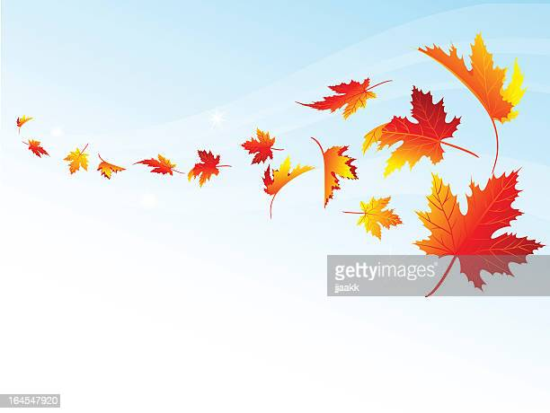 autumn falling - deciduous tree stock illustrations, clip art, cartoons, & icons