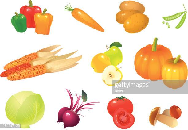 autumn gifts - common beet stock illustrations, clip art, cartoons, & icons