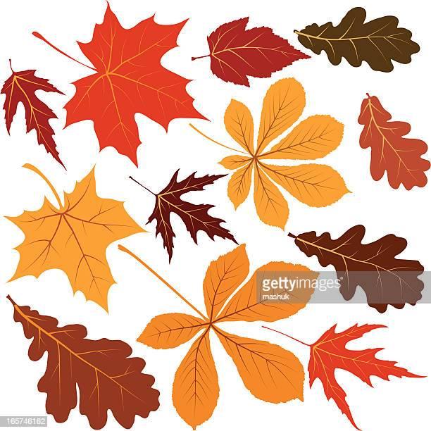 stockillustraties, clipart, cartoons en iconen met autumn leaves - esdoornblad