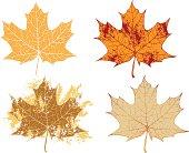 Autumn maple grunge leaves